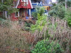 Looking down on backyard and neighboring backyards from porch.
