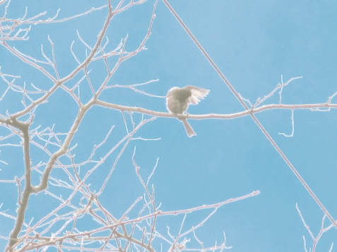 Wacky Photoshop edit of a Bushtit preening. On Woodland Drive north of First Ave.
