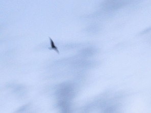 And a blurry gull.