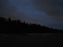 Silhouette of old-growth fir and cedar forest that shelters Wreck Beach from the road above.