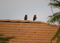Two females on a Mesa rooftop.