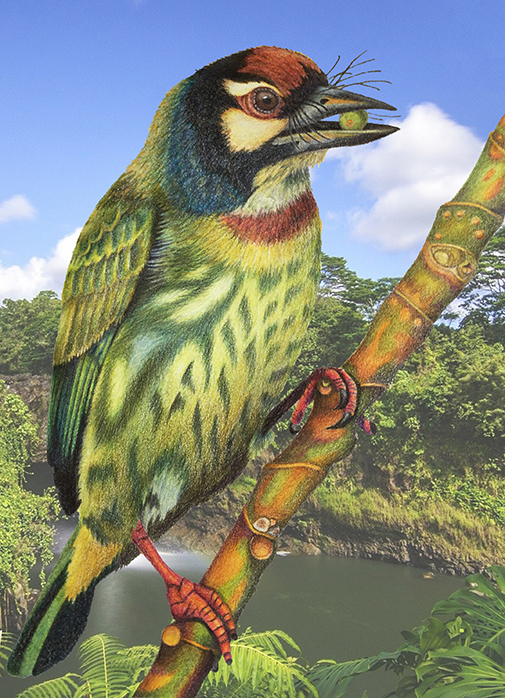 barbet_in_jungle
