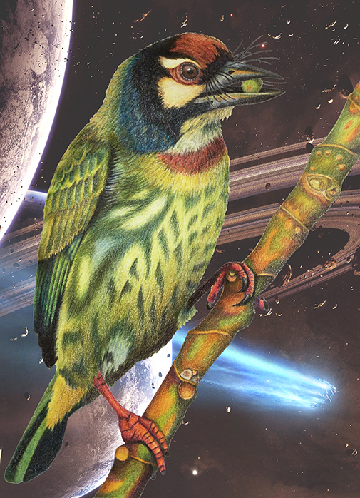 barbet_in_space