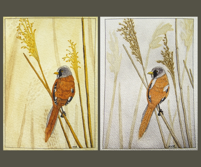 bearded_reedling_paintings