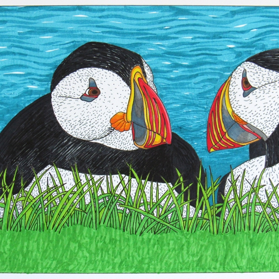 Atlantic puffin drawing