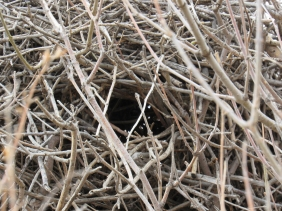 One of the two nest openings
